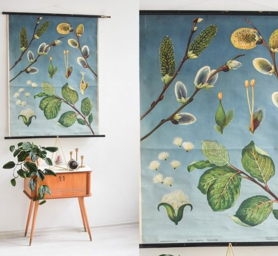Fill your Home with Art: Botanical Prints